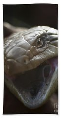 Blue Tongue Lizard Beach Towel