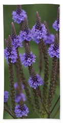 Blue Vervain Beach Sheet