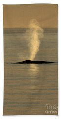 Beach Towel featuring the photograph Blue Whale At Sunset In Monterey Bay California  2013 by California Views Mr Pat Hathaway Archives
