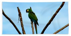 Blue-winged Macaw, Brazil Beach Towel by Gregory G. Dimijian, M.D.