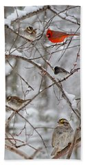 Blushing Red Cardinal In The Snow Beach Towel