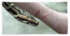 Boa Constrictor Bite Beach Towel
