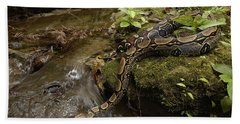 Boa Constrictor Crossing Stream Beach Towel by Pete Oxford