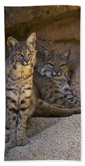 Beach Sheet featuring the photograph Bobcat 8 by Arterra Picture Library