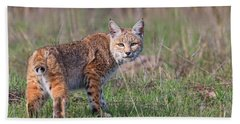 Bobcat Glance Beach Towel