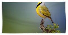 Bokmakierie Bird - Telophorus Zeylonus Beach Towel