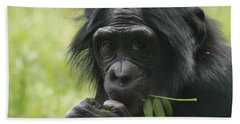 Bonobo Eating Beach Towel by Dan Sproul