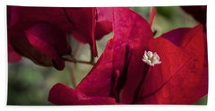 Beach Towel featuring the photograph Bougainvillea by Steven Sparks