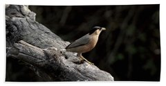 Brahminy Starling Beach Towel by Ramabhadran Thirupattur