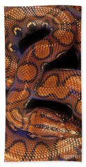 Brazilian Rainbow Boa Beach Sheet by Art Wolfe