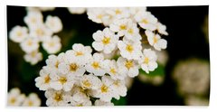 Bridal Veil Spirea Beach Sheet