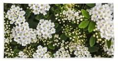 Bridal Wreath Flowers Beach Towel