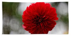 Bright Red Dahlia Beach Towel
