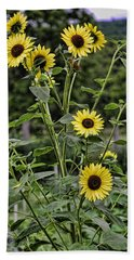Bright Sunflowers Beach Towel by Denise Romano