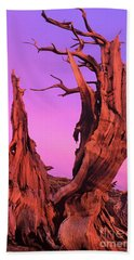 Beach Towel featuring the photograph Bristlecone Pine At Sunset White Mountains Californa by Dave Welling