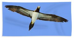 Brown Booby Beach Sheet by Tony Beck