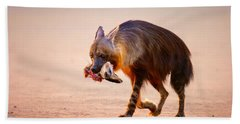 Brown Hyena With Bat-eared Fox In Jaws Beach Towel