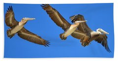 Brown Pelicans In Flight Beach Towel by Debra Martz