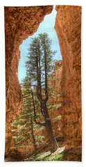 Beach Towel featuring the photograph Bryce Canyon Trees by Tammy Wetzel