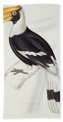 Great Hornbill Beach Sheet by John Gould