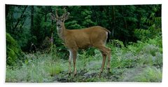 Beach Towel featuring the photograph Buck by Rod Wiens