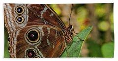 Beach Sheet featuring the photograph Blue Morpho Butterfly by Olga Hamilton