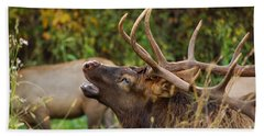 Bugling Bull Elk Beach Sheet