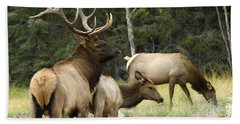 Bull Elk With His Harem Beach Sheet