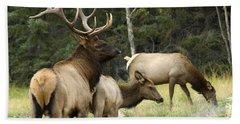 Bull Elk With His Harem Beach Towel