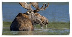 Beach Sheet featuring the photograph Bull Moose At Fishercap by Jack Bell