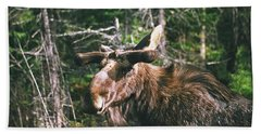 Bull Moose In Spring Beach Towel by David Porteus
