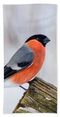 Bullfinch On The Edge Beach Towel
