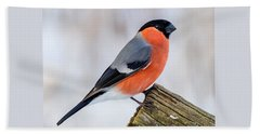 Bullfinch On The Edge Beach Sheet