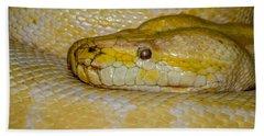 Burmese Python Beach Towel