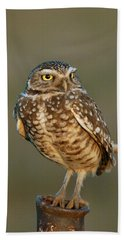 Burrowing Owl At Sunset Beach Towel
