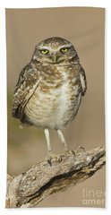 Beach Sheet featuring the photograph Burrowing Owl by Bryan Keil