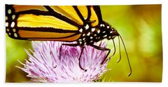 Beach Sheet featuring the photograph Busy Butterfly by Cheryl Baxter