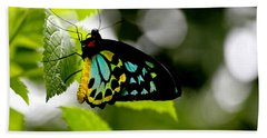 Butterfly Iv Beach Sheet by Tom Prendergast