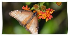 Butterfly On Mexican Flame Beach Sheet by Debra Martz