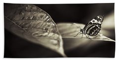 Butterfly Warm Tone Beach Sheet by Bradley R Youngberg
