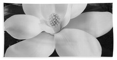 B W Magnolia Blossom Beach Sheet by D Hackett