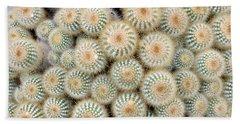 Cactus 35 Beach Sheet
