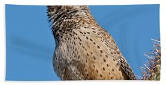Cactus Wren Singing Beach Sheet