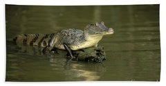 Caiman Crocodile Beach Towel
