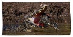 Caiman Vs Catfish 1 Beach Towel