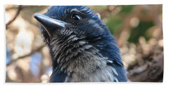 California Western Scrub Jay Beach Towel