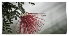 Calliandra Californica Beach Sheet by Stuart Litoff