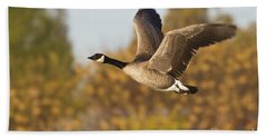 Canada Goose In The Skies  Beach Towel by Bryan Keil