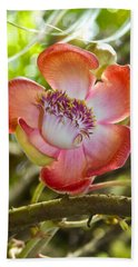 Cannonball Tree Flower Hawaii Beach Sheet by Venetia Featherstone-Witty