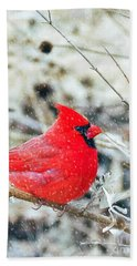 Cardinal Bird Christmas Card Beach Towel by Peggy Franz